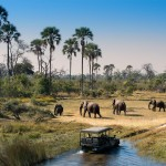 okavango-delta-safari-game-drive-botswana